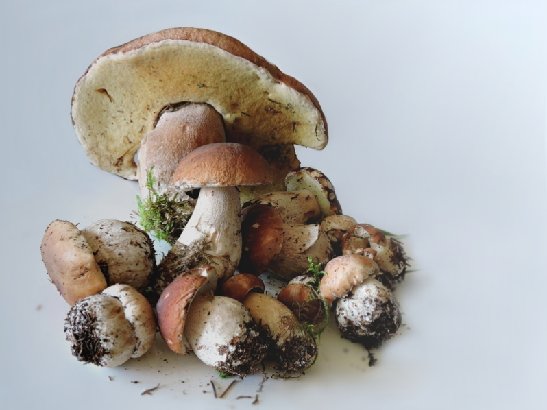 porcini-mushrooms-food-mushrooms-mushrooms-autumn-mushroom-fungus-1448463-pxhere.com.jpg